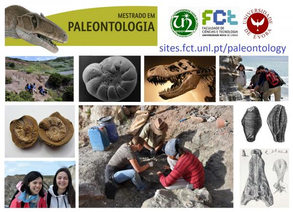 Schools That Offer Degrees in Paleontology | The Classroom